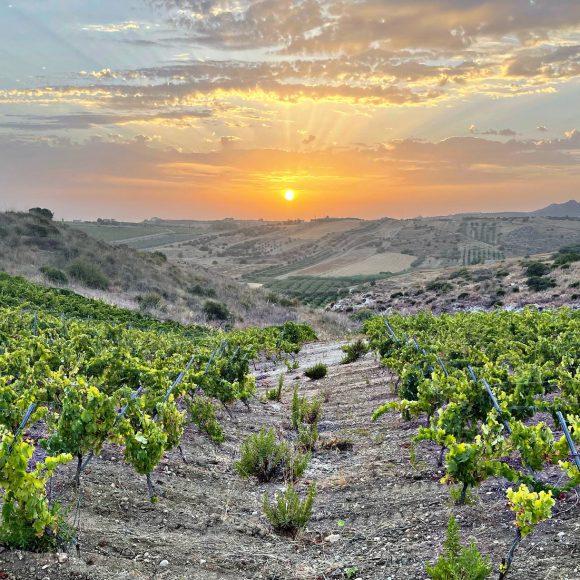 Cultura e tradizioni per un vino di successo